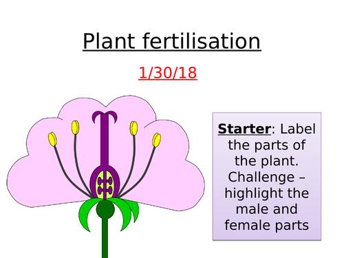 Plant Reproduction - Double Fertilisation