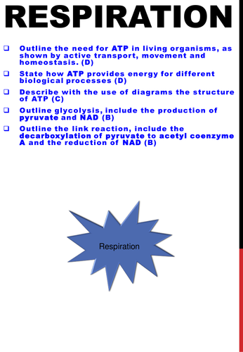 Respiration, ATP structure and glycolysis