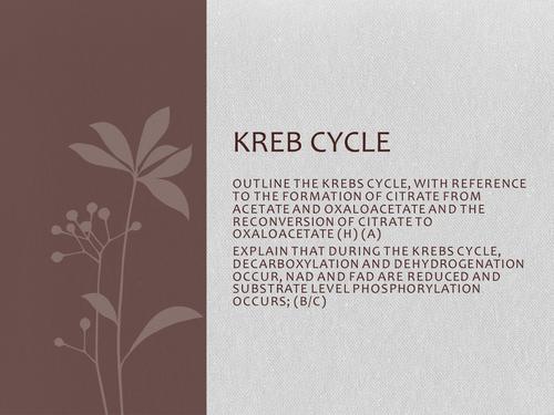 Kreb Cycle | Cirtric Acid cycle