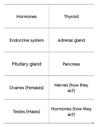 AQA - 9-1 - Endocrine System - FOUNDATION - Keywords