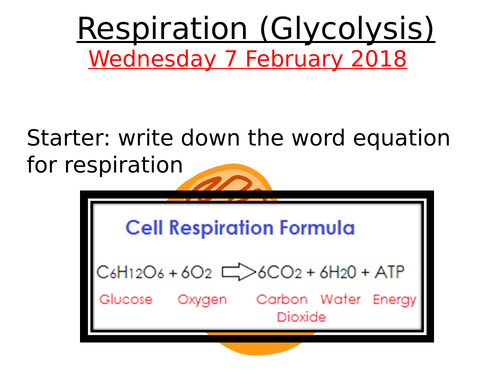 A2 Biology: Glycolysis, Link Reaction and Krebs Cycle Overview
