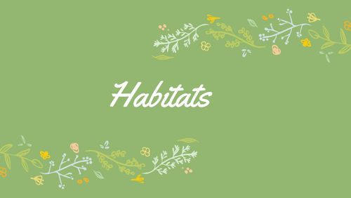 Habitats: presentation and worksheet