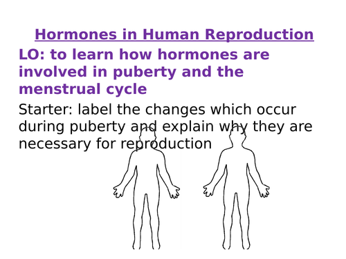 Hormones in the Human Reproductive System AQA New Spec