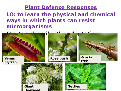 AQA Biology GCSE New Specification Plant Defences