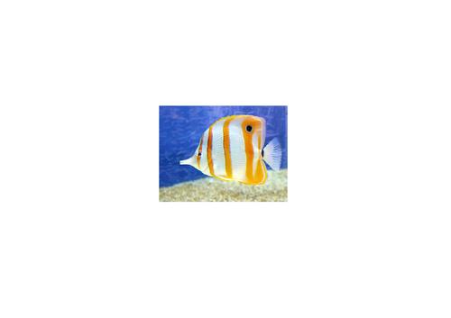 Describing Tropical Fish