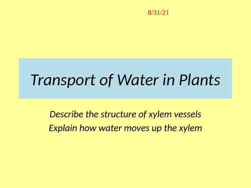 Transport of Water in Xylem