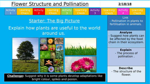 NEW AQA KS3 - Flower Structure and Pollination