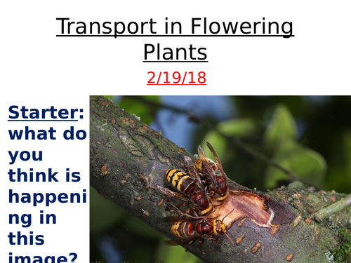 (I)GCSE Plant Transport - structure and function of xylem and phloem