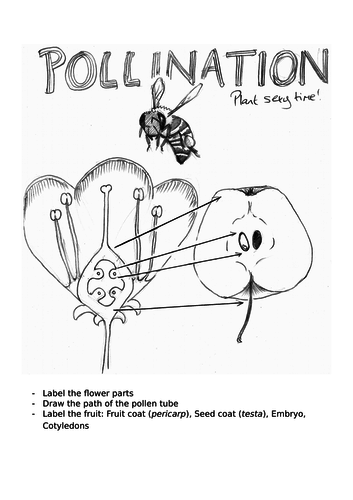 Pollination worksheet and lesson plan