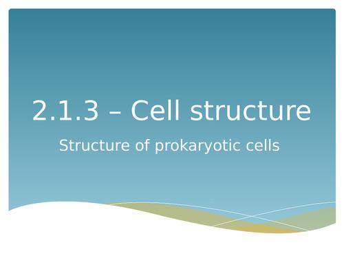 Prokaryotic cells AS level
