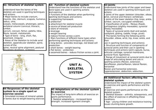 BTEC L3 Unit 1: Anatomy & Physiology Revision Display Sheets