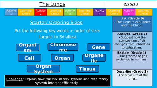 NEW GCSE AQA (9-1) - The Lungs (Organisation)