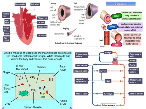 AQA GCSE Biology Circulatory System and Blood Revision Mat