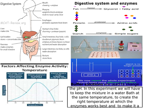 AQA GCSE 9-1 Biology Digestive system and Enzymes and Food Tests Mat