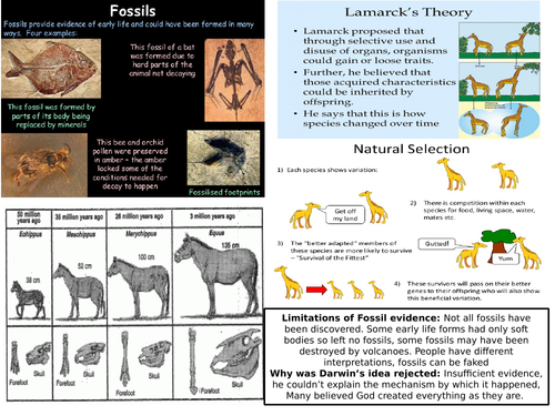 AQA GCSE 9-1 Biology fossils, Natural selection and Evolution