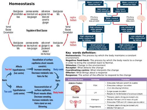 AQA GCSE 9-1 Biology Homeostasis revision Mat