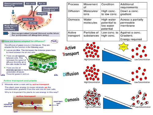 AQA GCSE 9-1 Biology Transport Systems, diffusion osmosis Active Transport