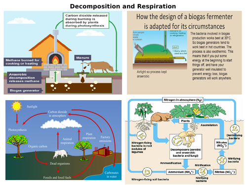 AQA GCSE 9-1 Biology Carbon Cycle and Decomposition