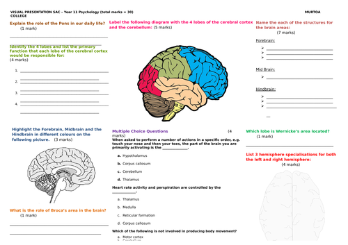 Test / SAC / Assessment on brain structure and functions