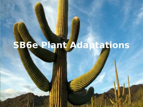 SB6e Plant Adaptations