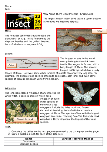 National Insect Week Numeracy Activities