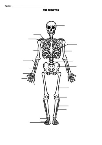 the skeleton blank diagram by rachaelshiels teaching. Black Bedroom Furniture Sets. Home Design Ideas