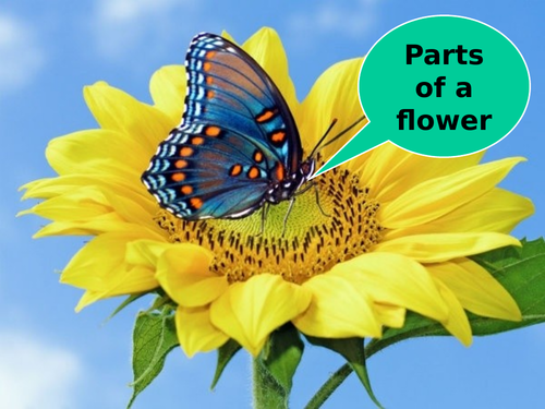 Parts of a Flower - PowerPoint