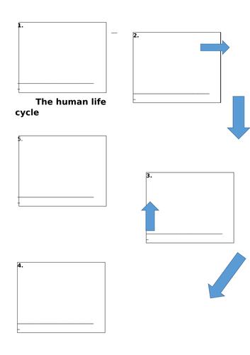 Human Life Cycle KS1 SCIENCE