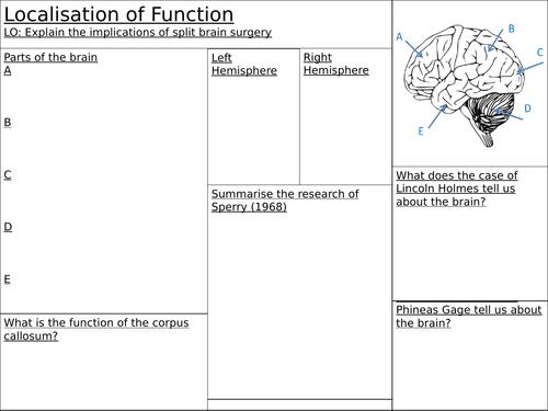 Localisation of Brain Function
