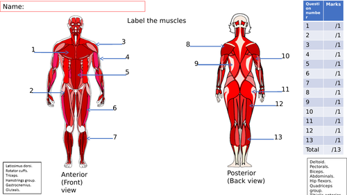Lesson starter on the major muscles of the body. by shaun_king ...