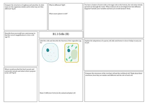 Revision mat: Activate 1 - B1 Cells