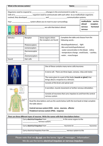 Nervous system, the brain and eye:-AQA GCSE Biology Revision Sheets on Nervous system, Brain and Eye