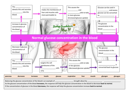 Glucose control -Paper 2AQA  Biology revision sheets- Controlling Glucose Concentration in the blood