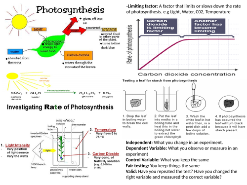 Photosynthesis and Transpiration Revision MAT and Question MAT