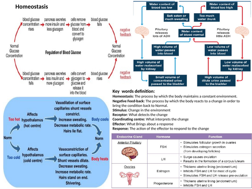 Nervous and Hormonal Systems-Revision MAT and Questions MAT 9-1