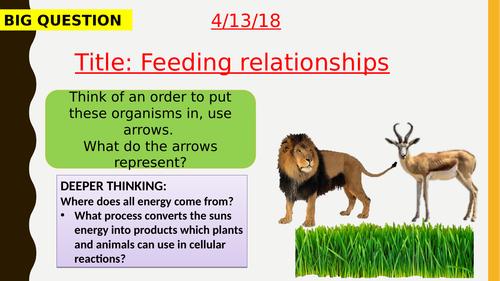 AQA new specification-Feeding relationships-B16.1