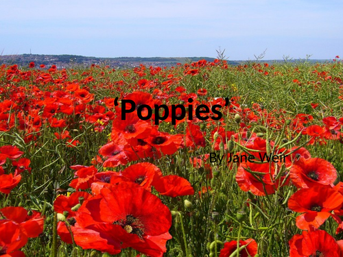 AQA Poetry Poppies by Jane Weir
