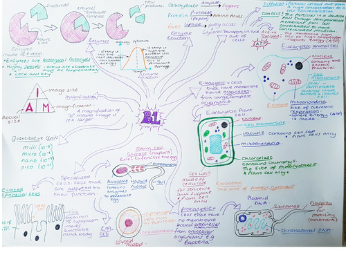 CB1 Revision Mind Map Edexcel 'Key concepts in Biology'