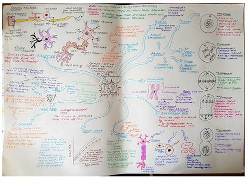 CB2 Revision Mind Map, Edexcel 'Cells &bControl'