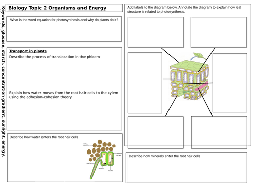 Plants GCSE revision mat new spec