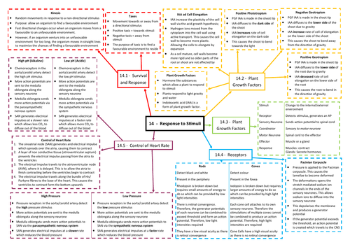 Response to Stimuli Revision Mind Map - AQA AS/A Level Biology (7401/7402)