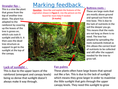 Tropical rainforests - Lesson 7 - Impacts of deforestation