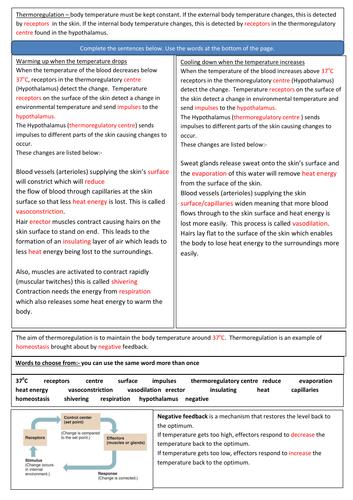 Homeostasis:- Thermoregulation - AQA GCSE Biology 9-1 Revision Sheets