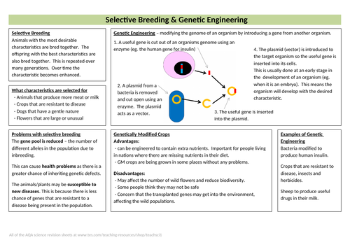 Selective Breeding & Genetic Engineering Knowledge Organiser (new AQA GCSE)