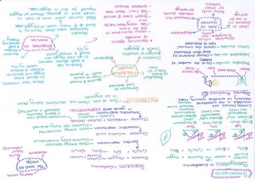 Bioenergetics Revision Mat