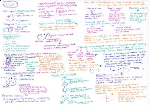 Cells Revision Mat