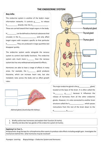 Printables Of Endocrine System Worksheet Tes Geotwitter