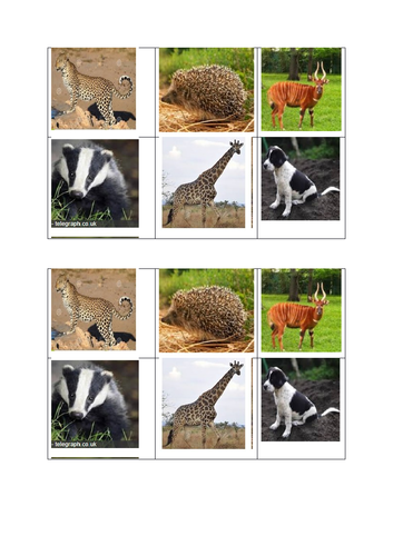 Colour pictures of African animals and UK animals