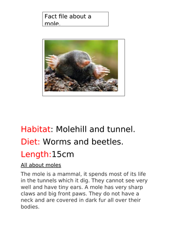 Fact file about a mole.