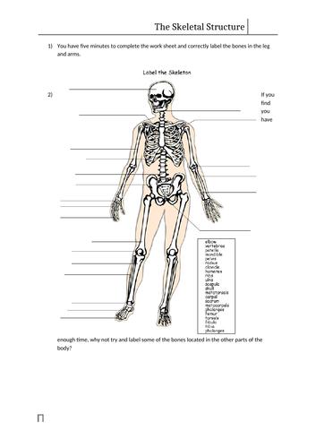 Skeletal System Work Sheet